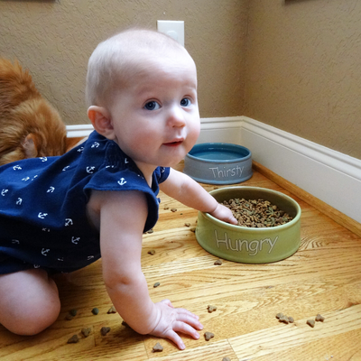 keep toddler out of cat food