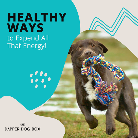 healthy ways to expend dog's energy