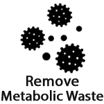 Post Workout Supplements To Remove Metabolic Waste