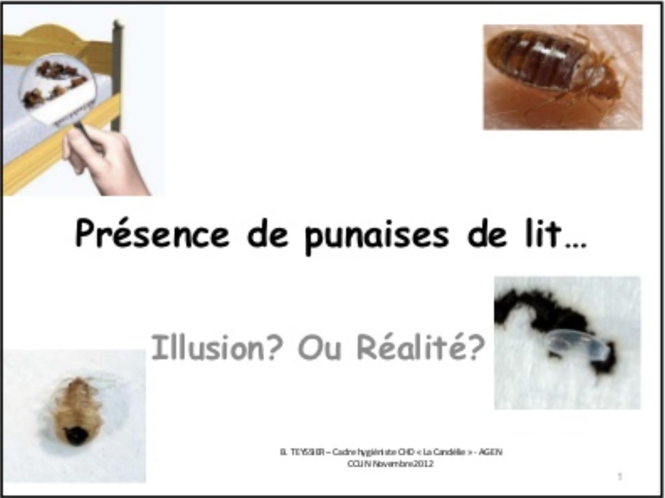 punaises illusion ou réalité