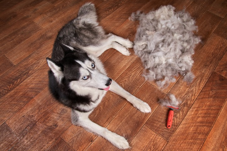 5 Easy Ways to Keep a Clean Home (and Your Sanity) During Shedding Season