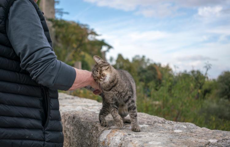 Door Buddy - Cat Showing Affection