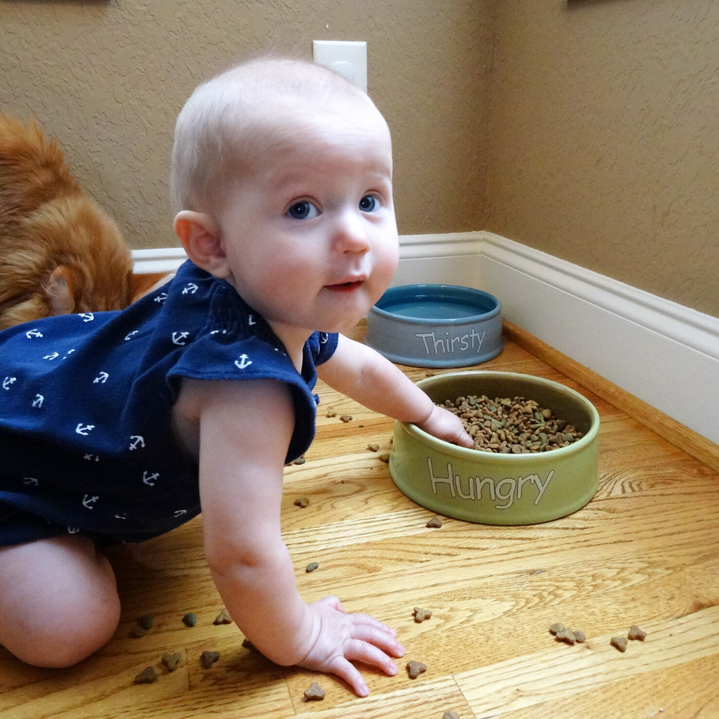 keep child out of cat food