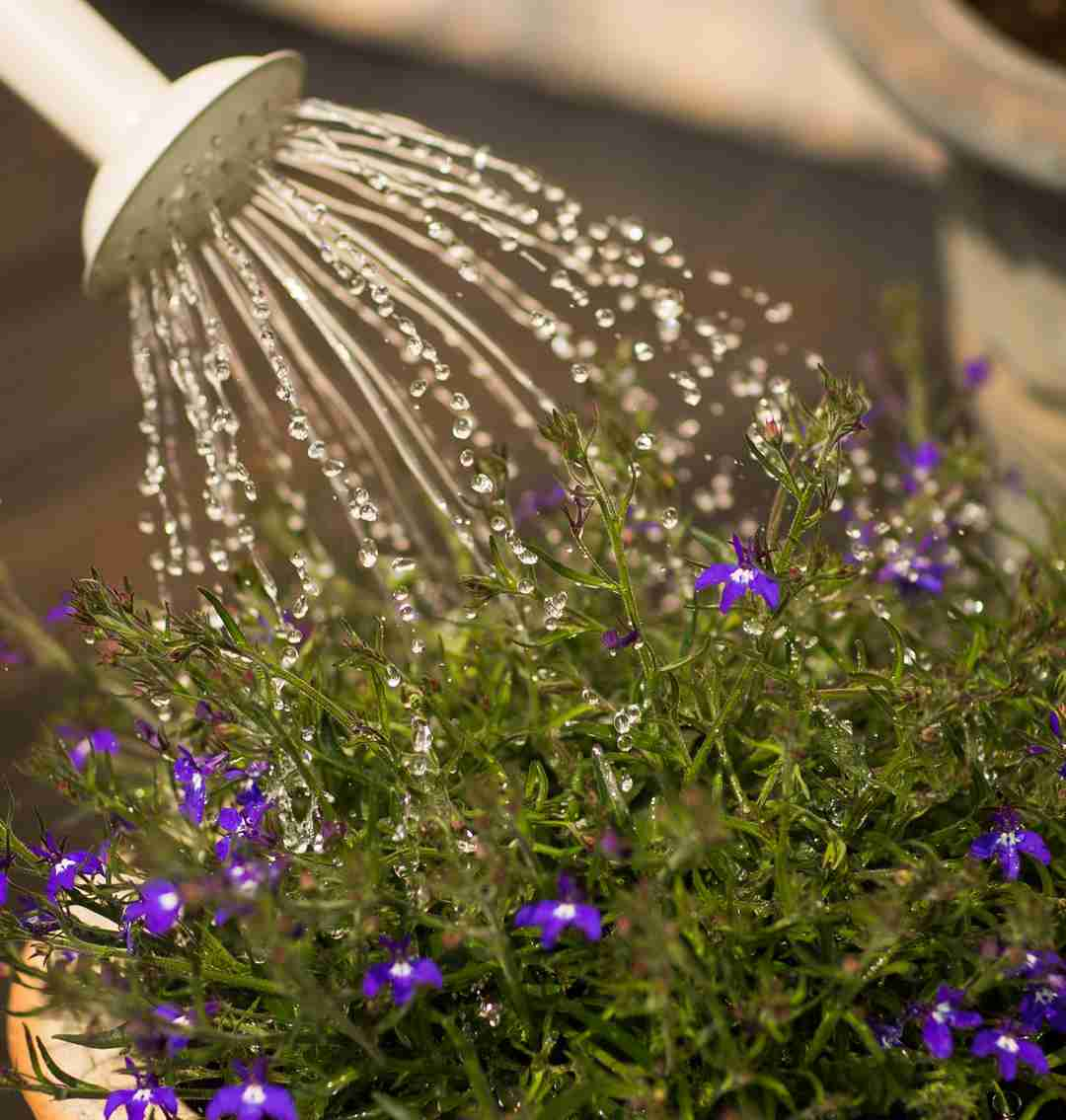 wellness practices watering plants 2