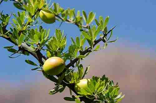 Why We Love Argan Oil