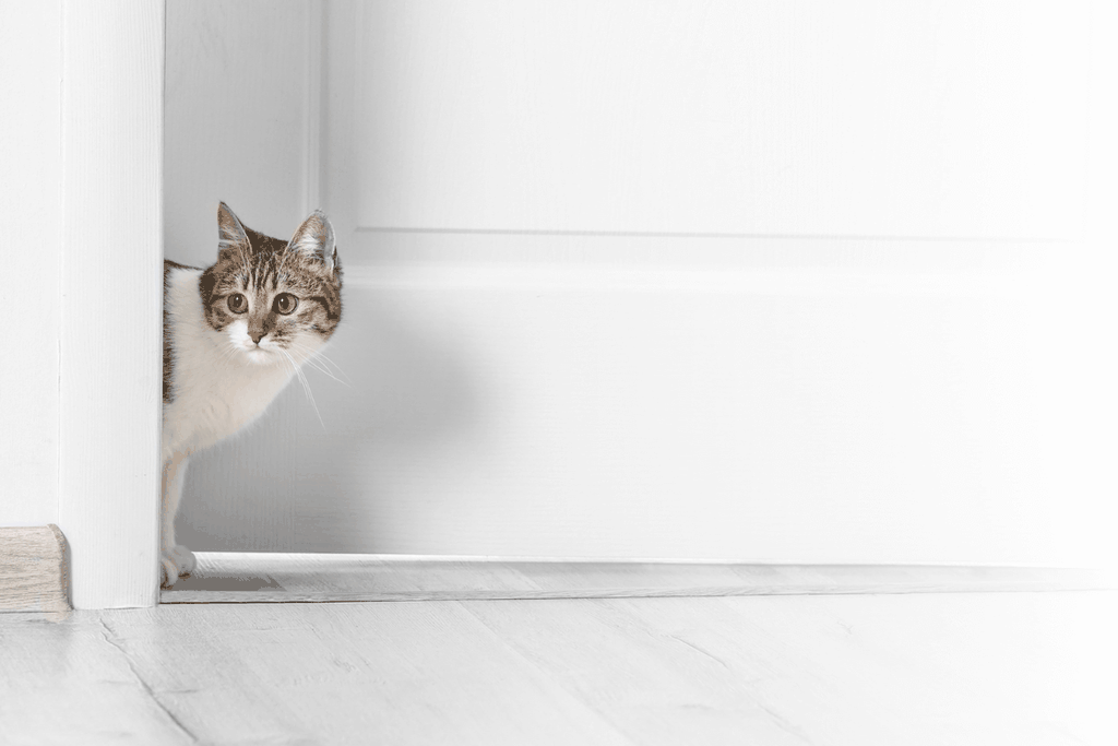 Why Do Cats Hate Closed Doors - Banner