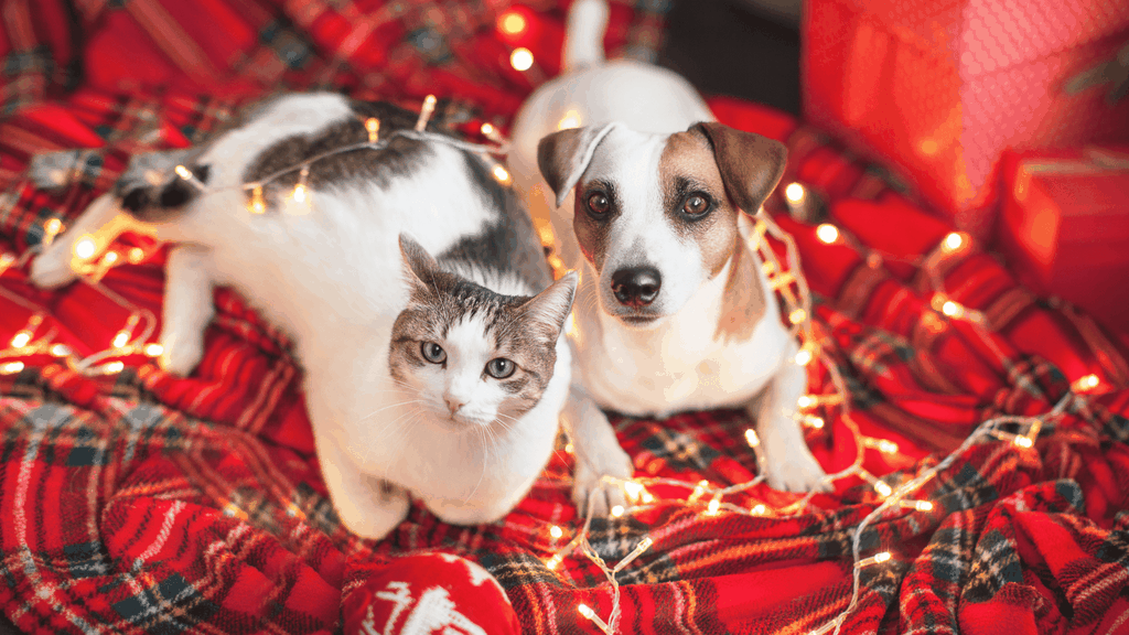 holiday pet safety checklist - blog image