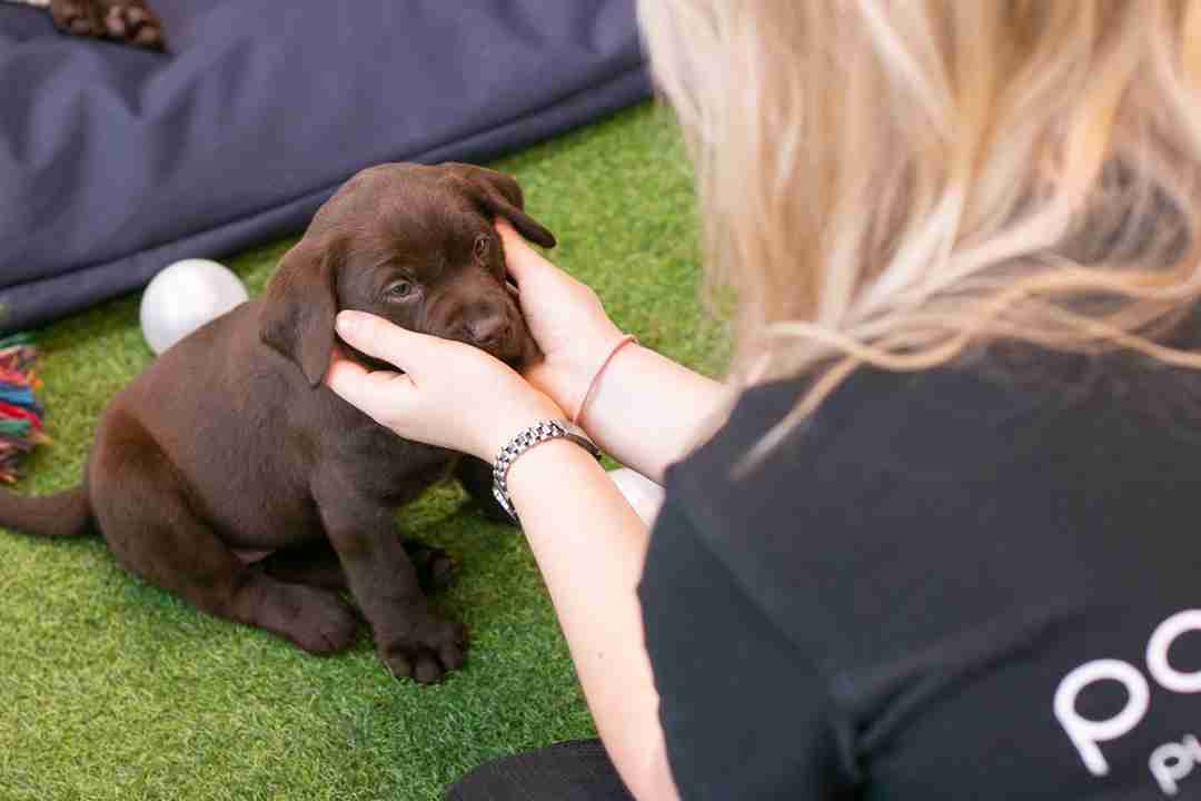 Importance of workplace wellness with puppies