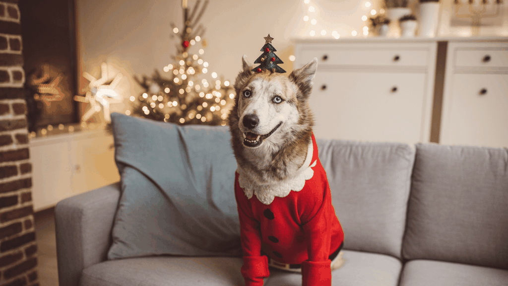 holiday safety for pets - cover image