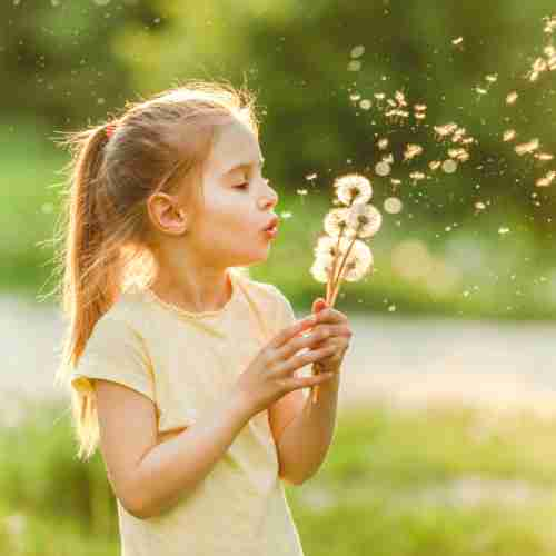Dandilion and Milk Thistle - Girl Blowing Dandelions Outside