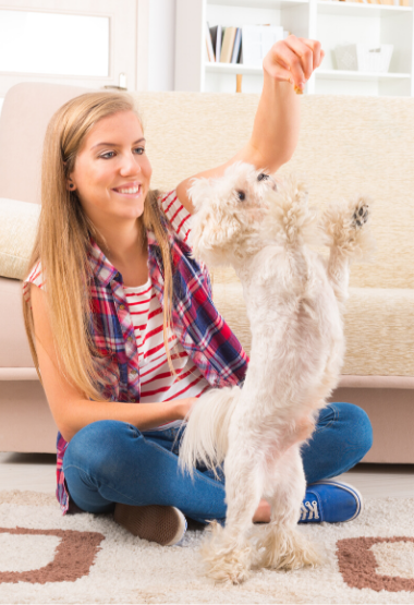 YOUNG WOMAN TEACHING HER MALTESE NEW TRICKS