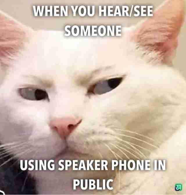 best cat memes speaker phone in public