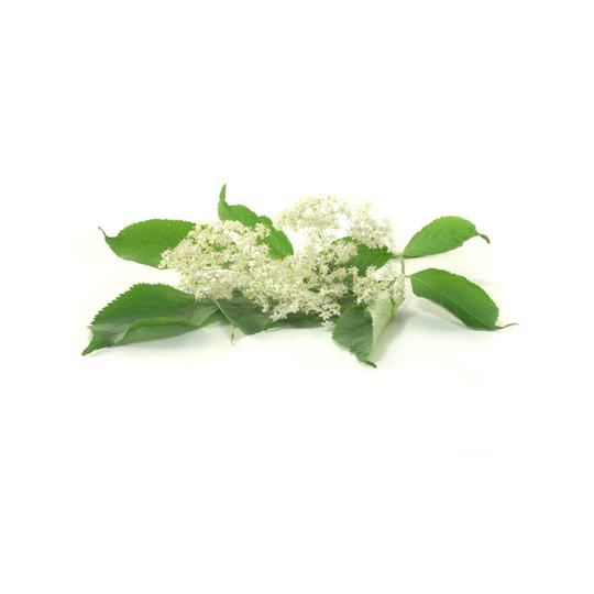 elderflowers for tree naturals hair growth oil