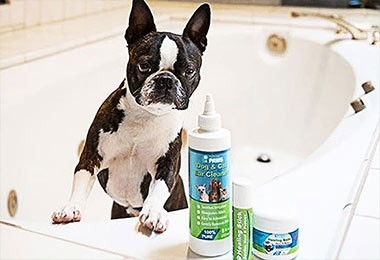 Telula the Boston - Ear Cleaner & Healing Balm