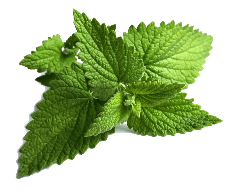 Dive in the Coolness of MINT