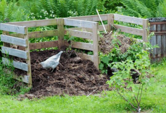 backyard chickens teraganix em-1 terakashi bokashi odor control