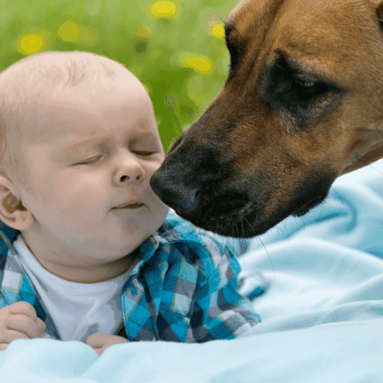 pets and babies - article image