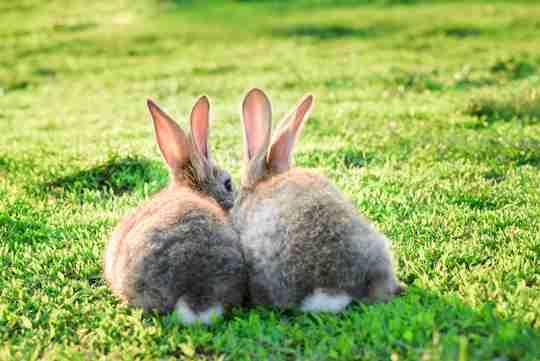 rabbit exercise