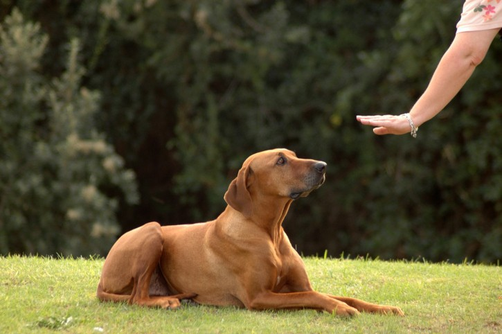 5 Commands All Dogs Should Know