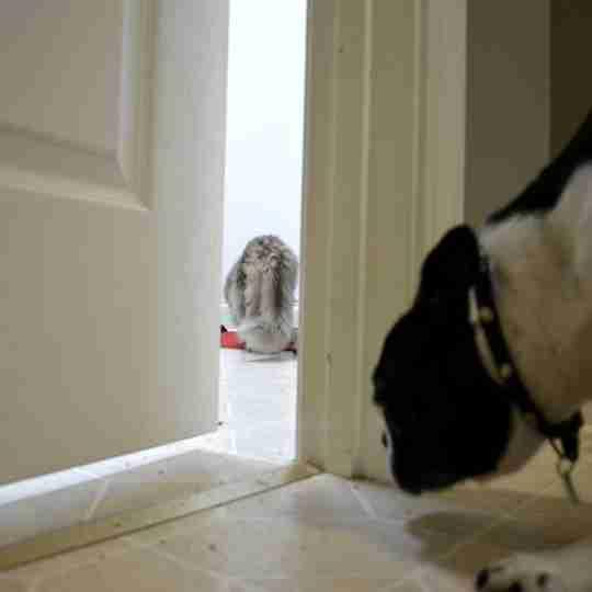 keep door open for cat