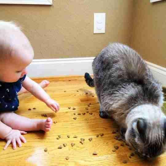 baby proofing cat food