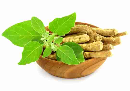 Ashwagandha root in a wood bowl and ashwagandha leaves