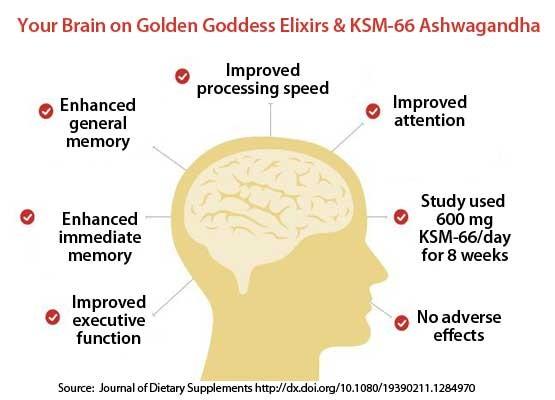 Your Brain on Golden Goddess Elixirs & KSM-66 Ashwagandha