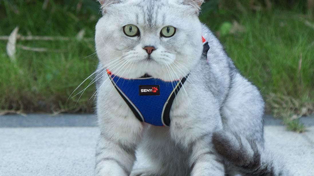 Senye Pet Escape Proof Cat Harness