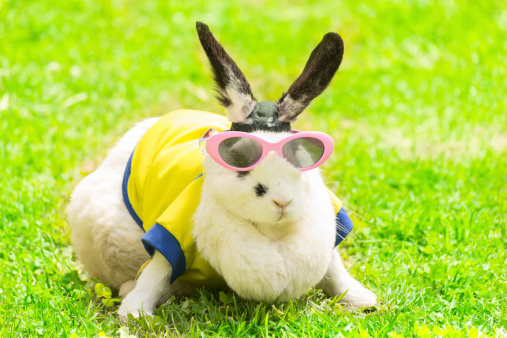 rabbit wearing sunglasses