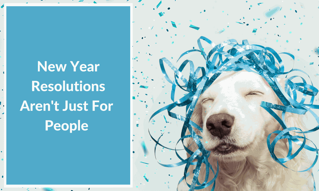 happy healthy dog new year resolutions