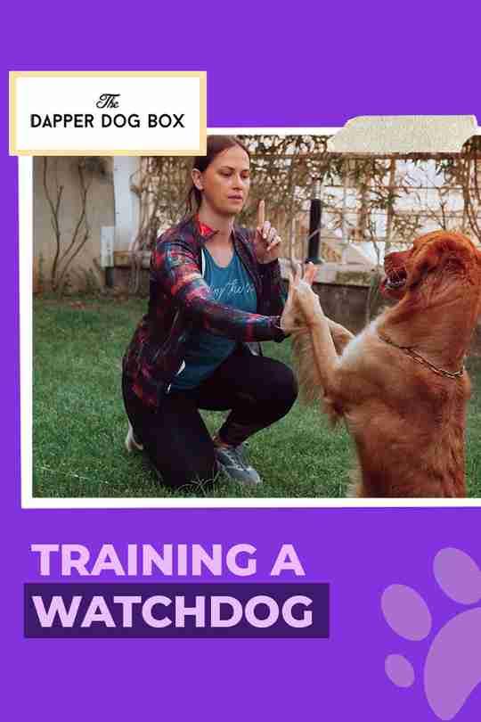 Training Your Guard Dog