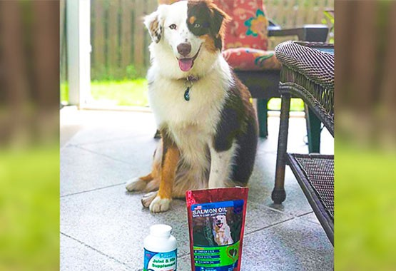 Indiana Jane - Salmon Oil Treats and Joint & Hip Supplement