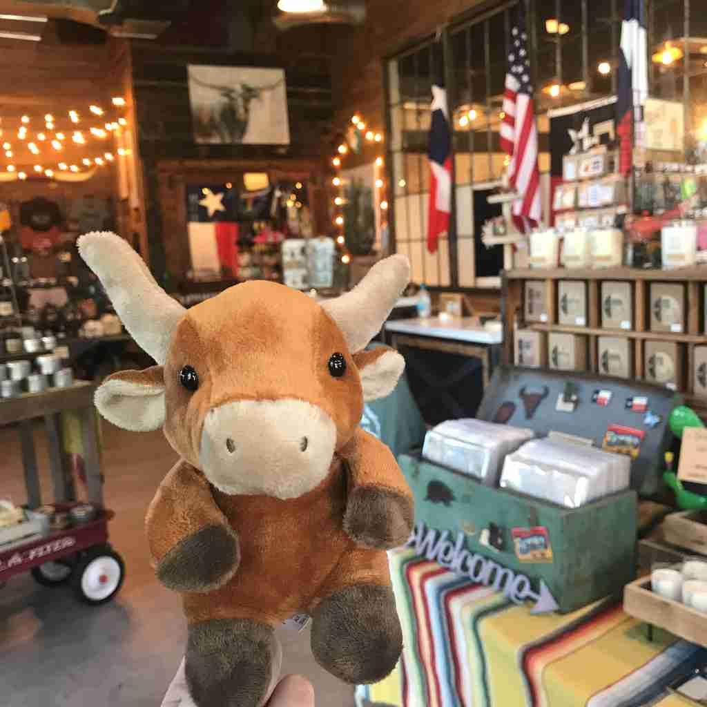 Longhorn at a shop
