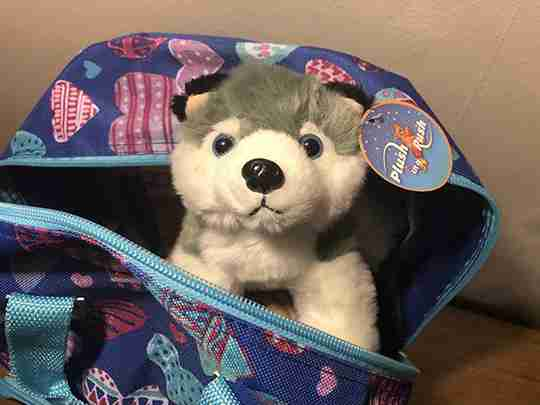 A wolf inside a backpack.