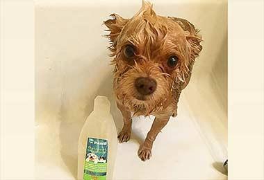 Buddy Flea - Oatmeal Shampoo for Dogs and Cats
