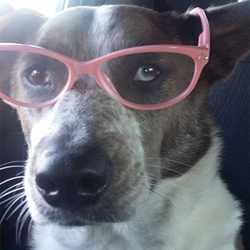Gracie the Dog with Glasses
