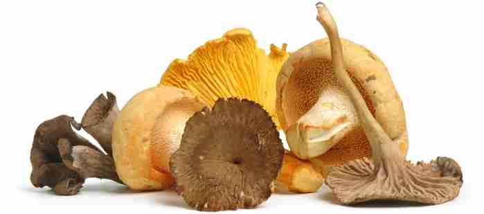 assorted mushrooms on white background