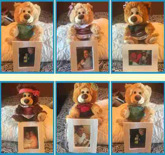 Bears in a nice row with their pictures.