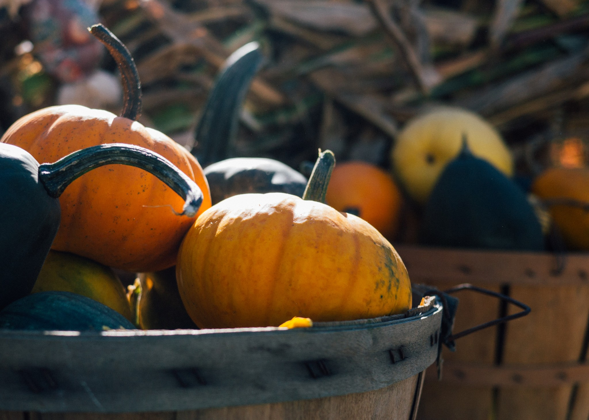 pumpkins in a bucket