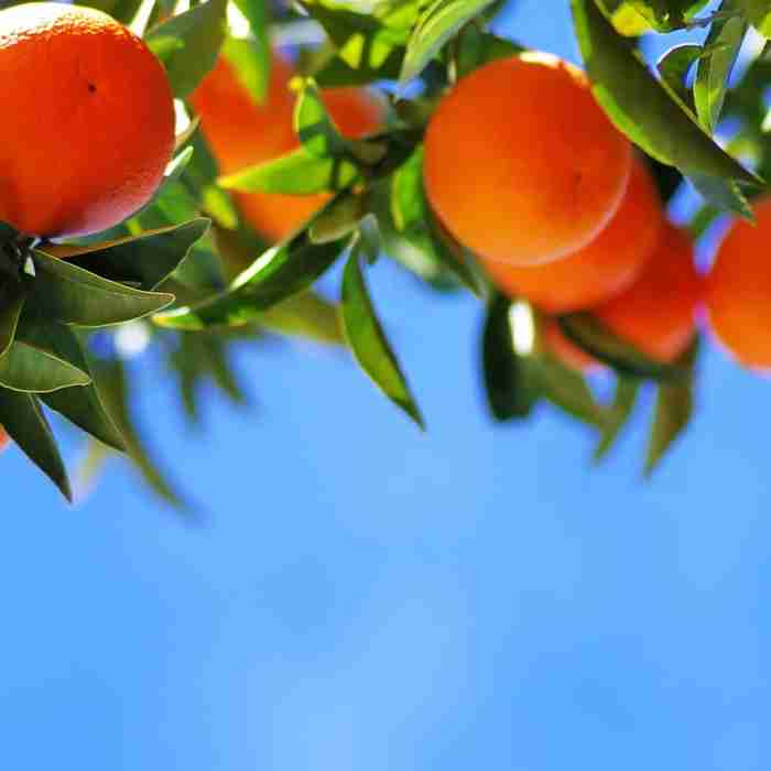 Oranges are a source of Vitamin C