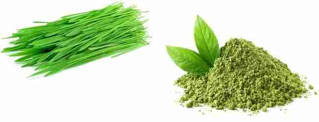wheat grass and matcha green tea ingredients