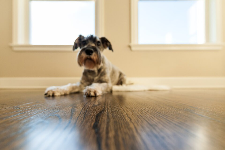 dogs can slip on laminate flooring