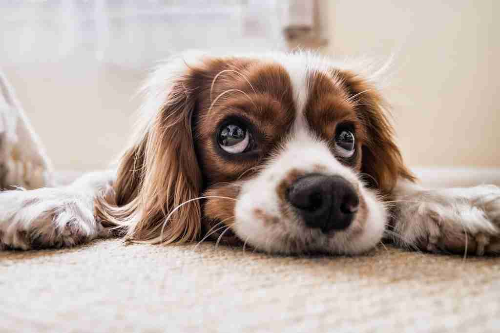 how to prevent cataracts in dogs