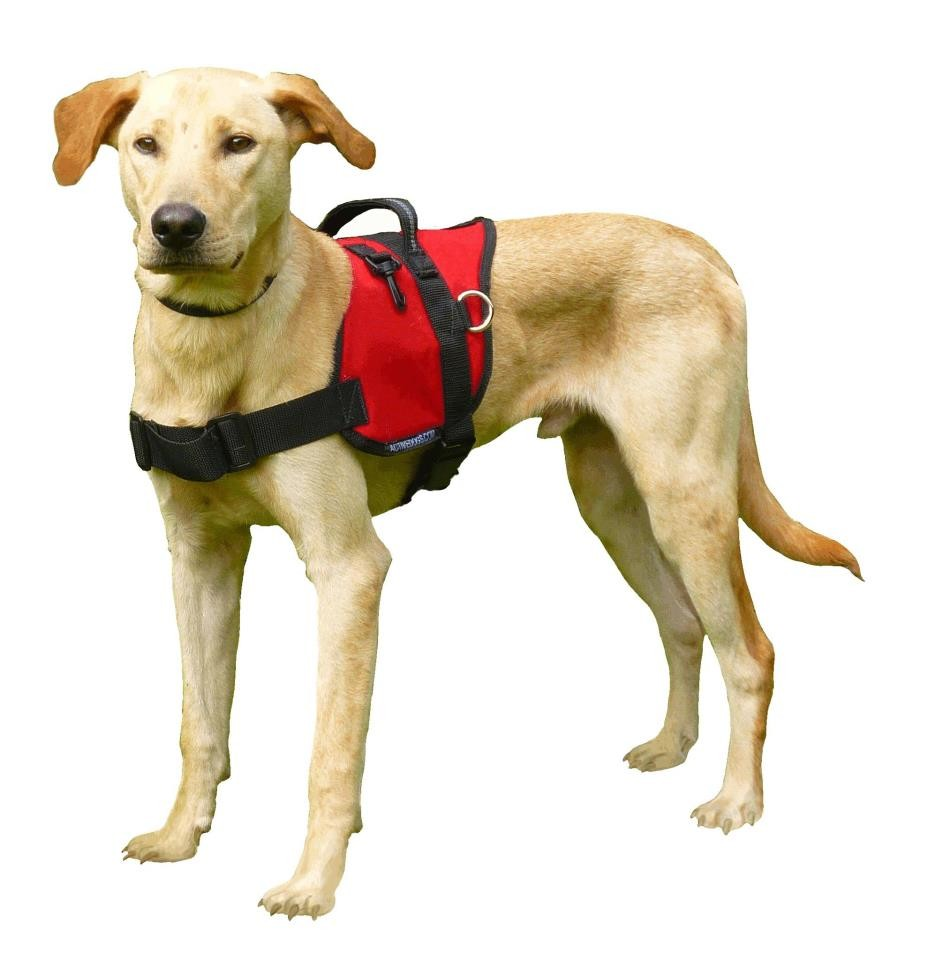 rocky dogscan chien détecteur punaises de lit
