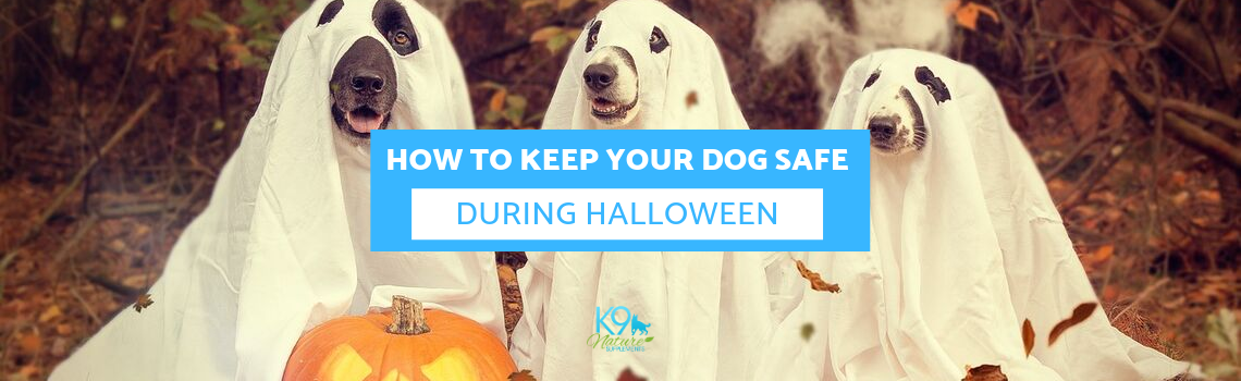 How to Keep Your Dog Safe During Halloween