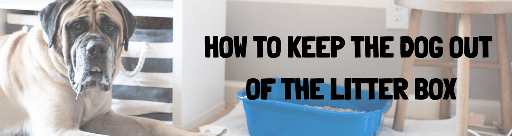 How to keep the dog out of the litter box - Website Banner
