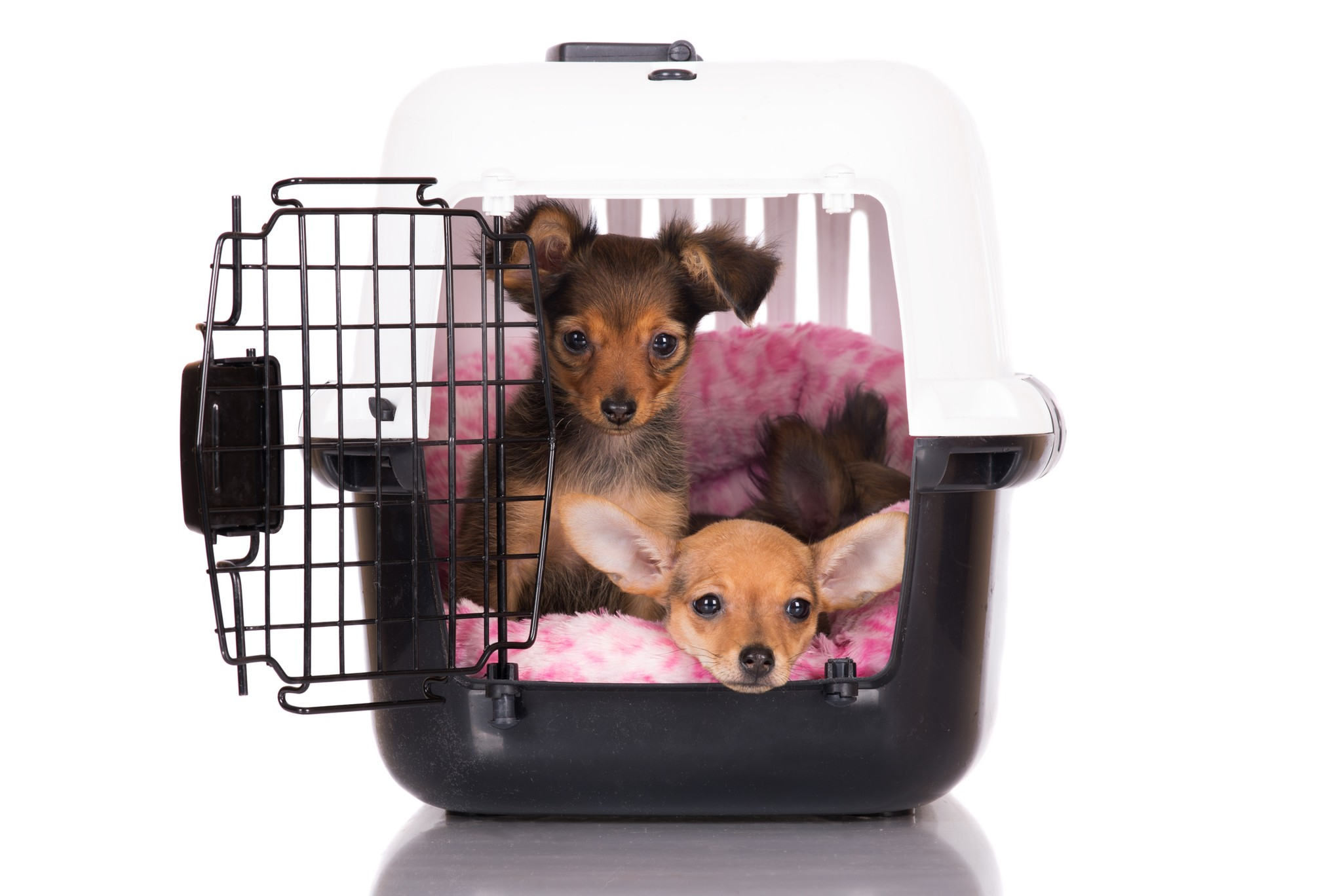How to Make Crate Training Easier