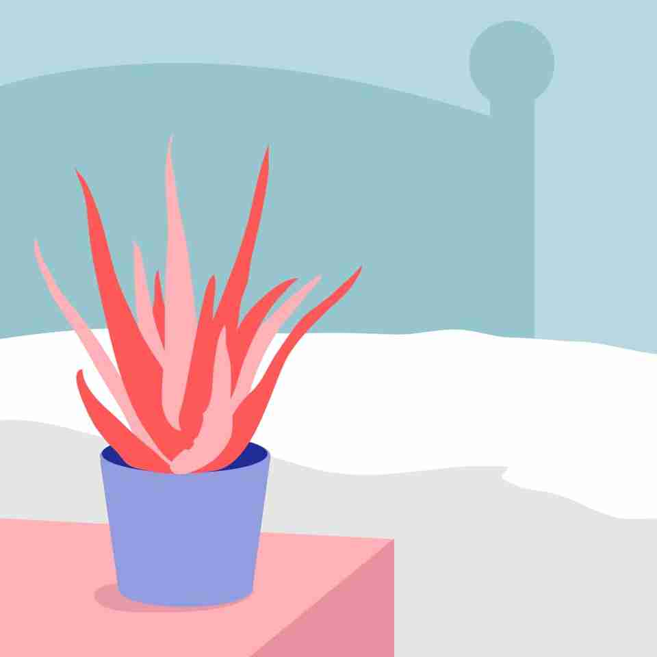 NASA considers Aloe Vera one of the best plants for purifying and improving overall air quality.