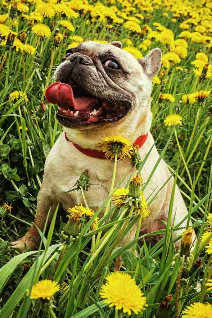 Ultimate Guide to Dog Skin Allergies and Conditions