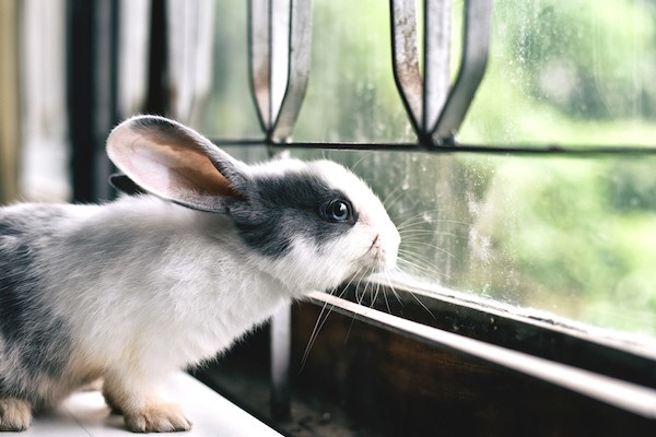 rabbit looking out the window